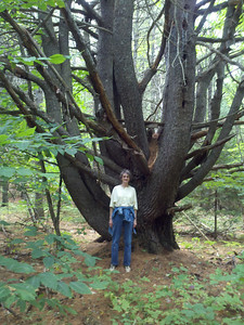 "Mom at her ""pouting tree"" which later became my hunting stand. There's still a couple of pieces of wood in it"