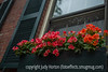 Begonias in a Flower Box