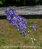 Delphinium and Tiny Butterfly