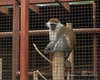 Monkey relaxing on a post