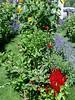 Gardens at Stonewall Kitchen - York, ME  (August 9, 2004)