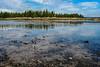 2016_08__DSC0995_Birdy Tide Pool