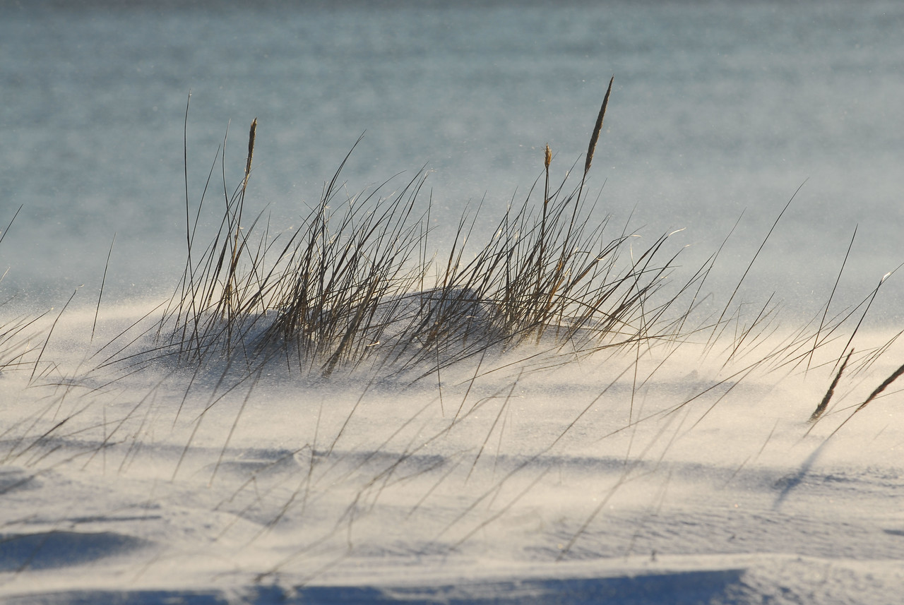snow blowing among the beach grass