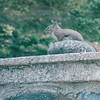 Squirrel on Wall - Strolling Along Walkway by Harbor - Bar Harbor, ME  6-27-03