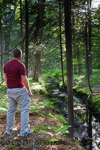 A Man Beside a Forest Creek