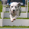 12:44pm<br /> We went to Freeport to see the dog agility show outside LL Bean