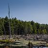 Maine-8847