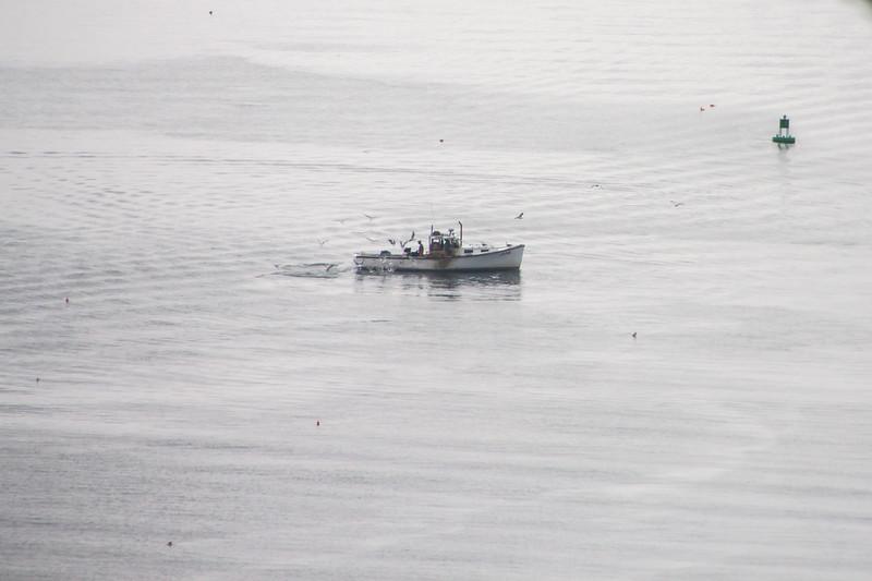 Maine-9249