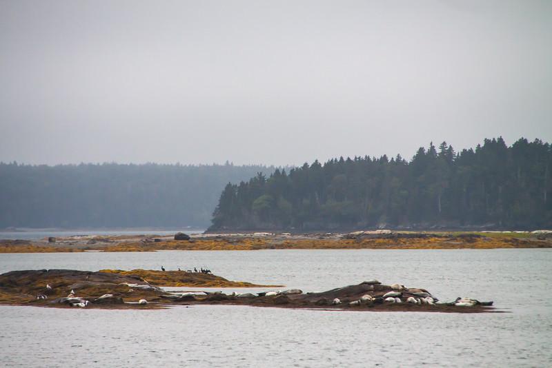 Maine-9197