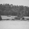 Maine-8973