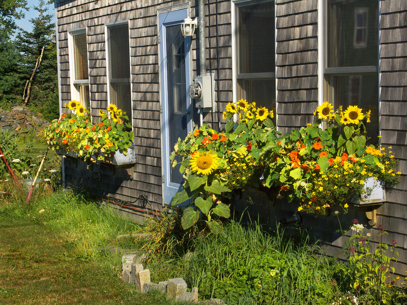 Flower Cottage, Port Clyde, Maine