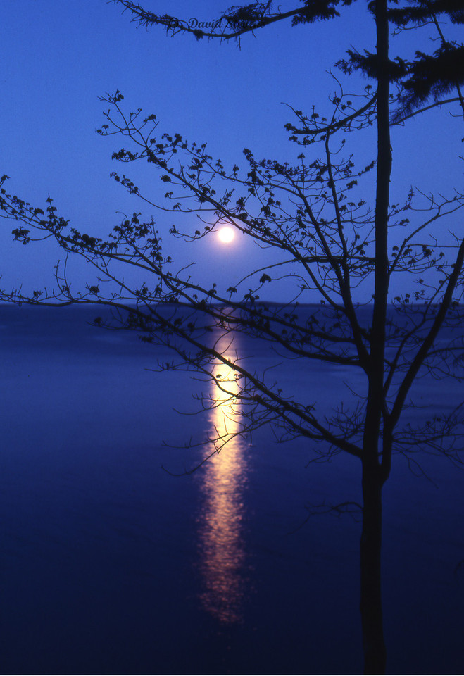 Maine Moon rise
