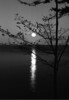 Maine Moon rise bw