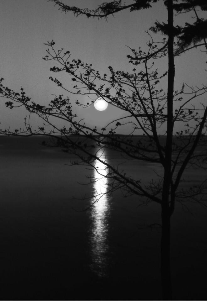 Maine Moon rise bw