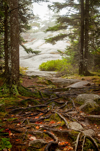Beech Mountain, Acadia National Park, Maine, USA