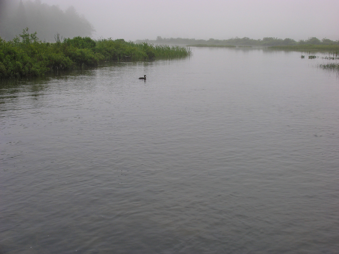 Early morning on Grand Lake Stream - July 2006