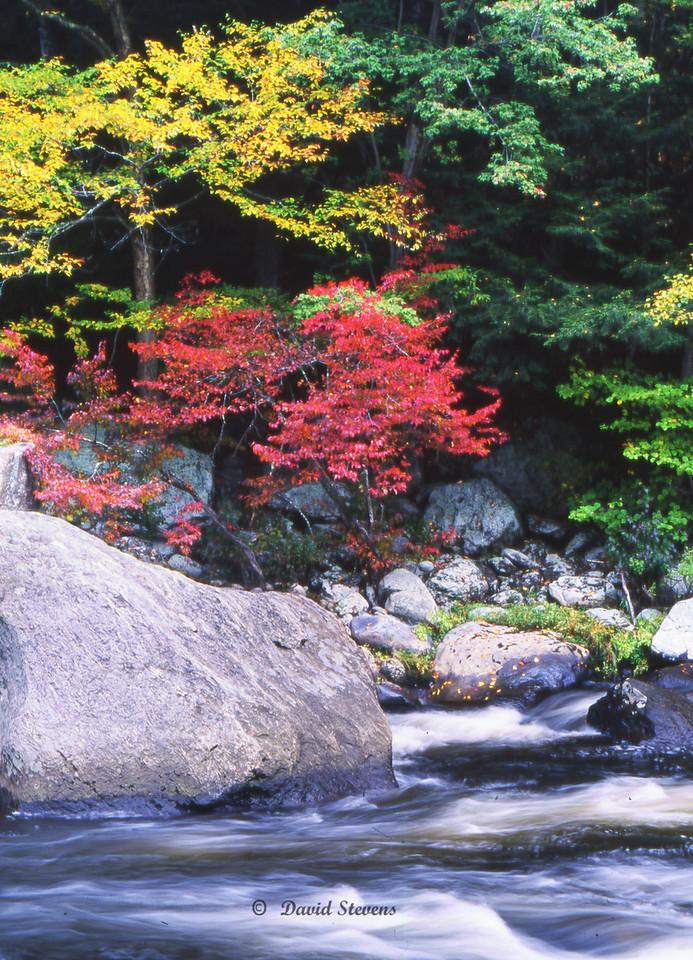 Trees boulder stream