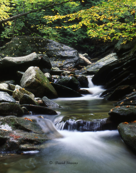 Jamaica park stream