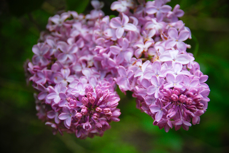 """<span id=""""title"""">Flowers</span> Not sure what kind these are, but they were also seen on the Bar Island hike."""