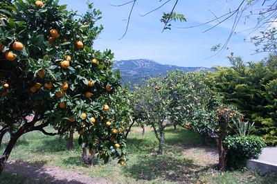 The theme of Majorca was Oranges.