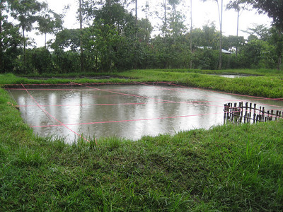 D2 Makumira Farms tilapia pond