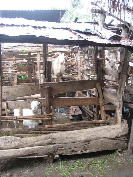 D2 Makumira Farms m