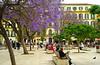 Jacarandas in Malaga's Market Square