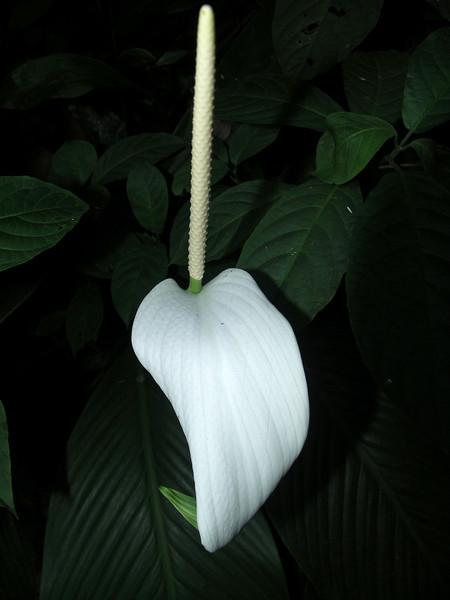 Botanical Gardens , Georgetown, Penang.