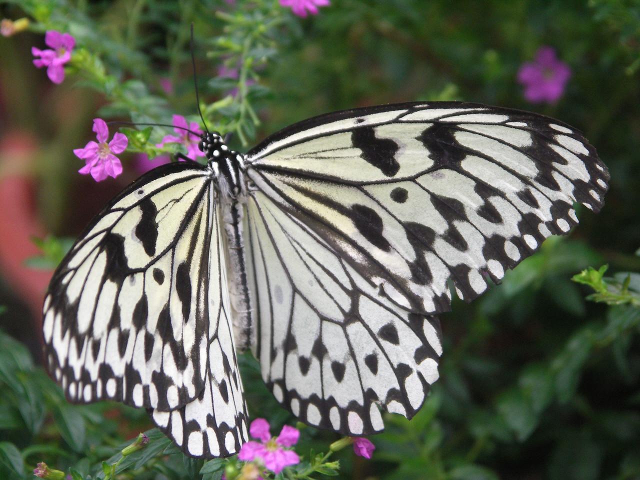 Penang Butterfly Farm, Malaysia