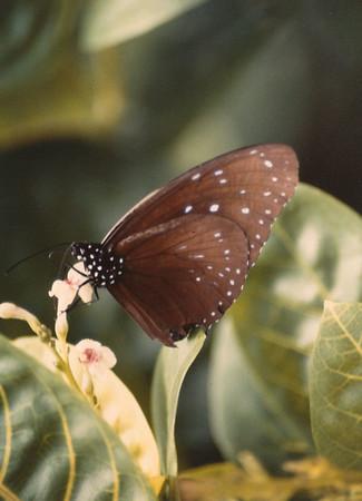 Malaysia 1988