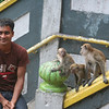 The monkeys were definitely not shy.