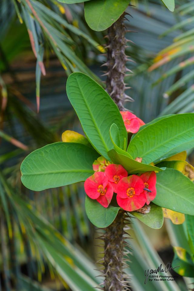 Kuala Lumpur Botanical Gardens