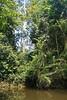Jungle at Lake Chini