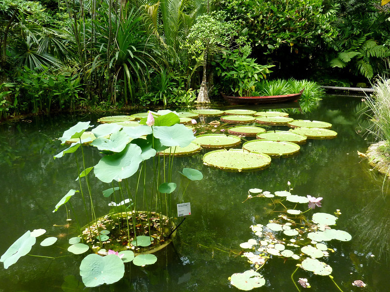 Lily pond, Tropical Spice Garden, Penang