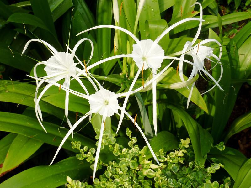 Interesting blooms, Singapore Botanic Garden