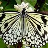 Butterfly on plant, Butterfly Garden