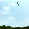 One of many eagles spotted on our mangrove kayaking tour