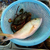 Our Ling Loong Seafood dinner ingredients for Chili Pepper Crab and Red Snapper Grilled with Garlic and Midin