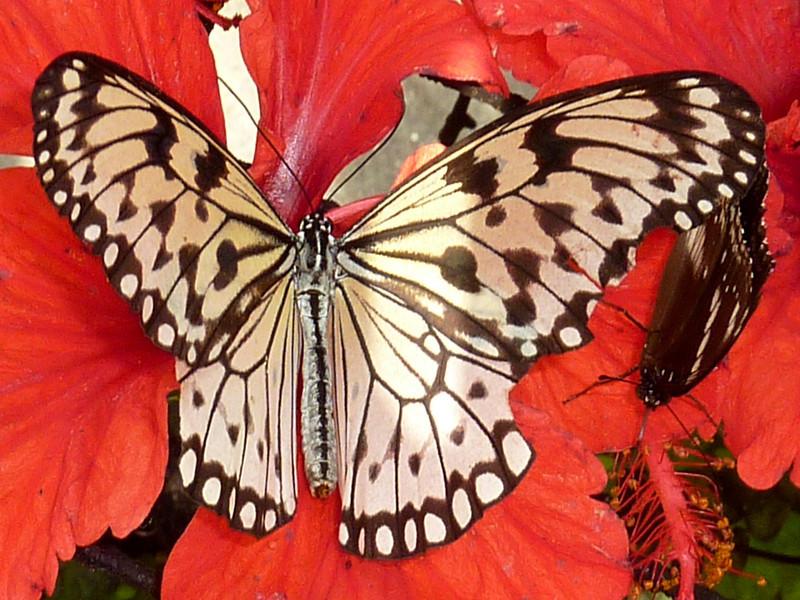 Butterfly on flower, Butterfly Garden, Penang