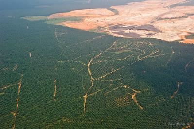 с континента на остров лететь 55 минут  а внизу пальмы