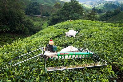 Electric tea leave cutter