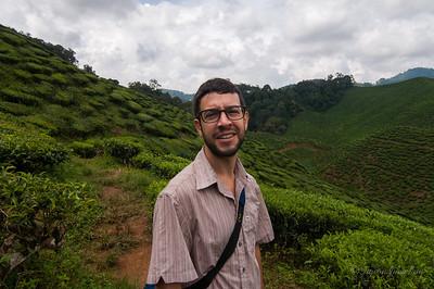 Cameron Valley tea plantation field