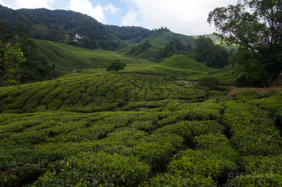 Boh Sungei Palas Tea Centre