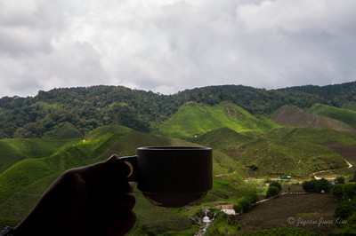 Drinking tea with the view of Cameron Valley Bharat tea plantation field
