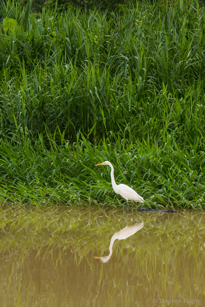 wildlife on the kinabatangan river