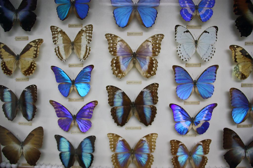 Butterflies, KL Butterfly Park