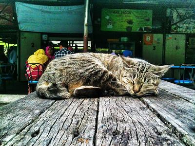 Cat in Malaysia