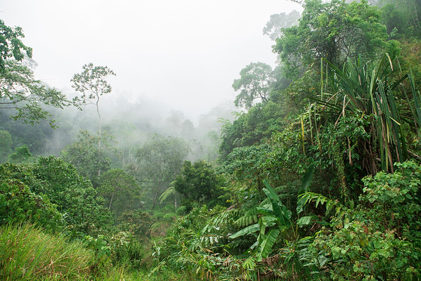 Dense tropical rainforest along the foothills of the Ipoh Mountains in central Malaysia.
