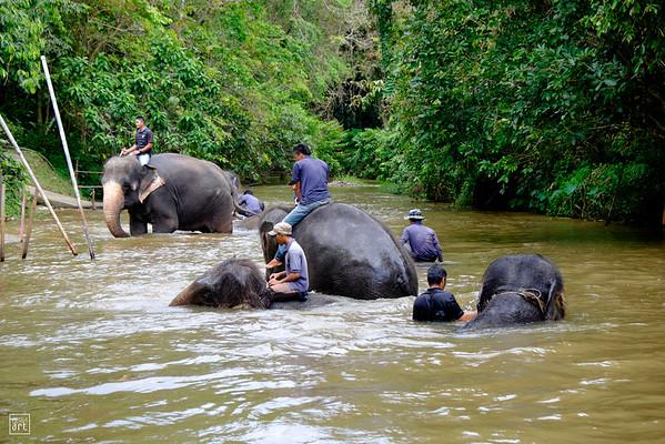 Kuala Gandah | Elephant Sanctuary