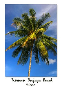 coconut 0404_r1_filtered